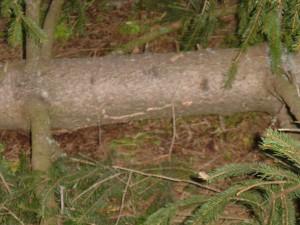 2005-05-026